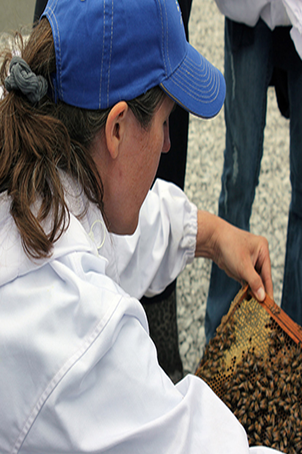 State Apiarist Tammy Horn examing honey produced on a reclaimed mine site