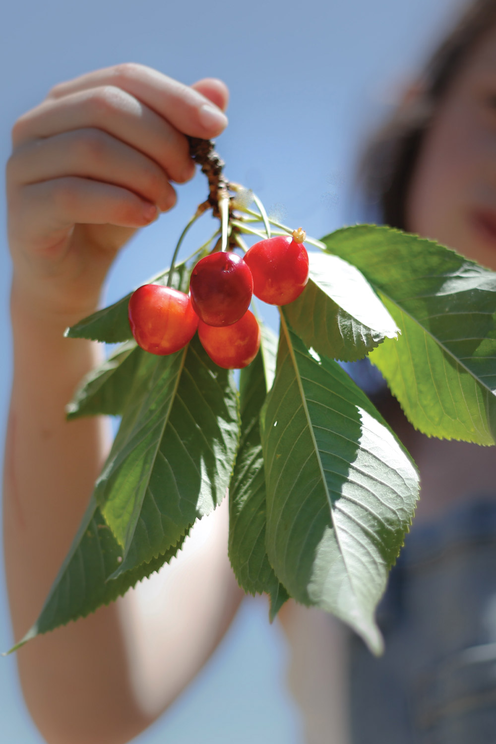 Girl holding fresh cherries on a branch