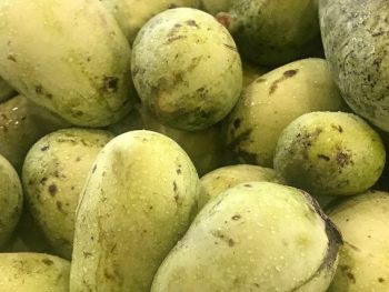 What is a pawpaw? Largest USA native fruit.