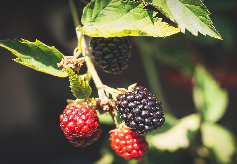 Blackberry Bourbon Jam Uses - Fresh berries to jam