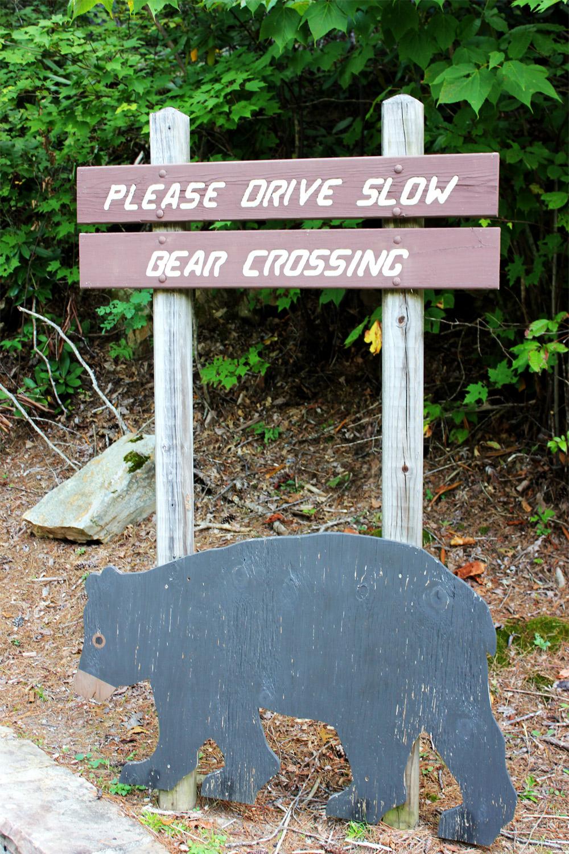 Bears love heirloom apples! Warning sign.