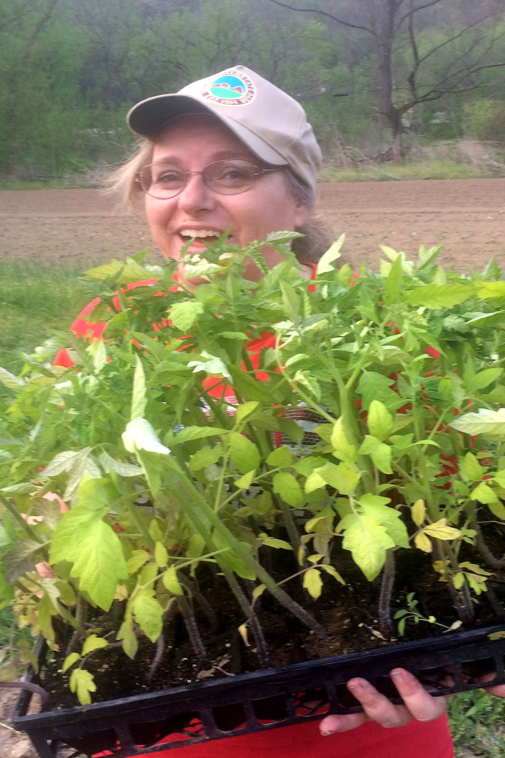 Joyce at Friends Drift Inn with tomato plants for the April high tunnel